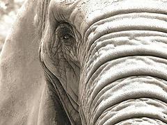 elephant1s